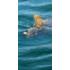 Kép 2/3 - Carp 'R' Us Clearwater Fluorocarbon 15lb - előkezsinór 20 méter