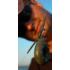 """Kép 3/3 - Carp'R'Us Snag Clip  - ólomkapocs előke 30lb, 90cm """"növényzet"""" vagy """"iszap"""" színben"""