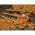Kép 3/3 - Guru Tackle 45g Large Method Feeder (X-Safe System) - method feeder kosár
